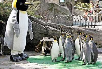 March of the Pittsburg Penguins